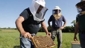 Veteranos de guerra acuden a las abejas como terapia