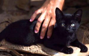 Buscan mascotas negras en redes sociales de Tamaulipas con malas intenciones