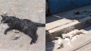 Matan a más de 20 perros y gatos en Edomex