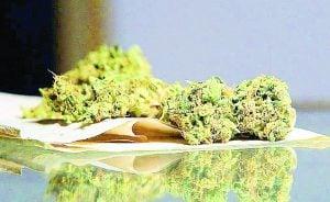Legalización de la mariguana avanza