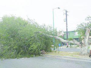 Derriban vientos gigantesco árbol