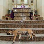 Cura lleva perritos callejeros a misa para buscarles un hogar