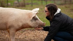 Reality vegetariano busca que concursantes se coman a sus mascotas