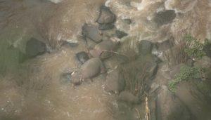 Mueren 5 elefantes al intentar rescatar a cría y caer por cascada
