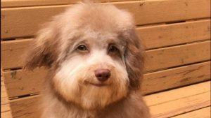 Perrito sonríe sin parar al ver que va a ser adoptado