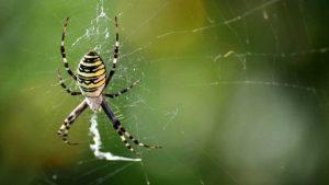 Tras fuerte dolor de cabeza descubre que una araña vivía en su oído