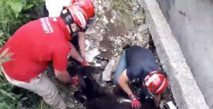 VIDEO: Así rescataron a 'Rufino'