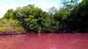 Laguna de Manialtepec en Oaxaca se tiñe de rosa