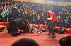 Oso ataca a domador durante función en circo