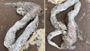 Hallan rara criatura marina de 3 metros en playa