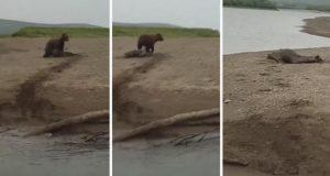 VIDEO: ¡Se salva foca a punto de ser devorada!