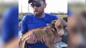 Perro sobrevive bajo escombros, a un mes de 'Dorian'