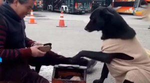 Perrito pide a bolero que lustre sus patitas (VIDEO)