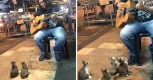 Artista callejero fue ignorado por todos, luego 4 gatitos vinieron a mostrar su apoyo