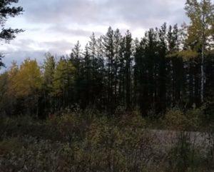 VIDEO: Captan aterradores gritos en un bosque