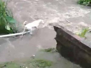 Perrito es arrastrado por la corriente de un río; así lo rescató su dueño