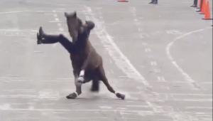 VIDEO: Jinete cae de su caballo en desfile del 20 de noviembre