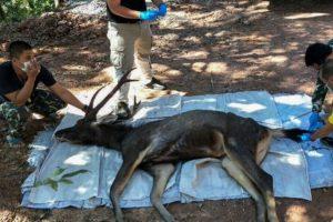 Muere ciervo con 7 kilos de basura en el estómago