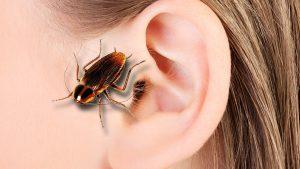 Hombre aloja 'nido' de cucarachas en su oído