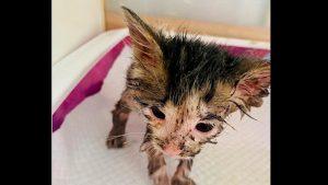 Gatito lucha por su vida luego de que la bañaran en pegamento