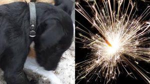 Perrito muere de ataque al corazón al escuchar cohetes