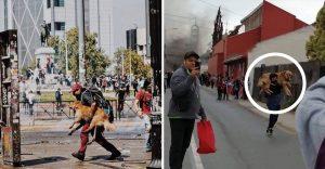 Jóvenes rescataron a perros en protestas en Chile