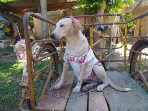 Conoce a la perrita con huipil yucateco que rompió las redes