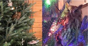 Familia descubre a búho viviendo en su pino de Navidad