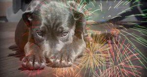 Esto es lo que escucha un perro cuando usas pirotecnia (VIDEO)