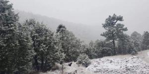 VIDEO: Comienzan las nevadas en Chihuahua