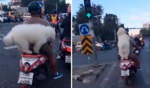Perro causa sensación por su singular forma de viajar con su dueño en motocicleta