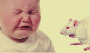 Padres olvidan limpiar la carita a su bebé y ratones le carcomen el rostro
