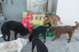 Cabildo avala sacrificar perritos de la calle en Ciudad Madero