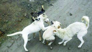 Arranca 'Campaña Itinerante    de Salud y Prevención Canina