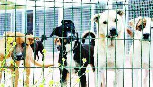 Recluta APA voluntarios  para cuidar animales