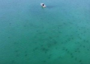 Cientos de tiburones 'invaden' una playa cerca turistas