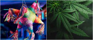 Celebran Año Nuevo rompiendo piñata llena de marihuana