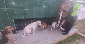 Perros callejeros hacen fila para alimentarse en los dispensadores de comida