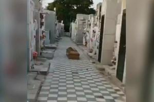 Por $70.000, familiares de difunto dejaron el ataúd tirado en el cementerio y se agarraron