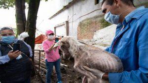 Rescatan a 35 perros al borde de la muerte en Veracruz