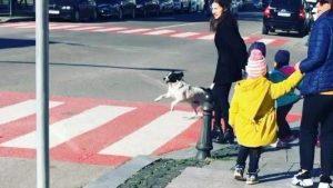 VIDEO: Conoce a Kupata, el perro que ayuda a controlar el tráfico