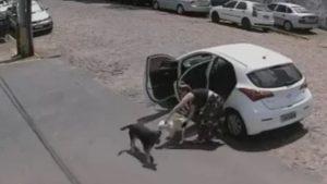 VIDEO: Mujer abandona a un perro con discapacidad