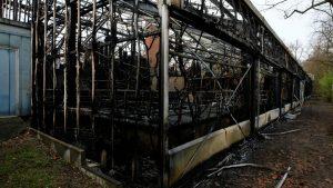 Incendio mata a 30 animales en zoológico de Alemania