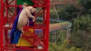 VIDEO: Lanzan a cerdo del bungee para promocionar parque de diversiones