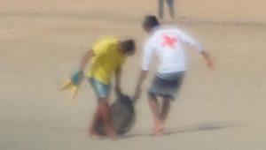 Registra Oaxaca muerte masiva de tortugas en sus playas; piden se declare emergencia ambiental