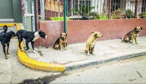Aumentan a 20 mil  los perros callejeros