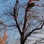 Leopardo se refugia en un árbol para escapar de un perro (VIDEO)