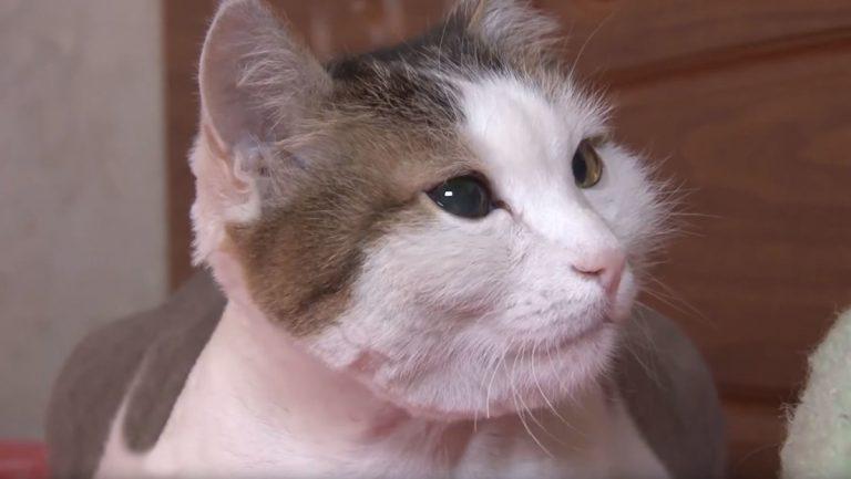 Gato mordió a su dueña en el cuello para salvarle la vida
