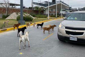 NLD está lleno de perros; invaden hasta los puentes