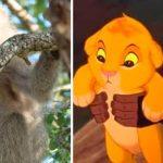 Mono babuino se roba a león y recrea clásica escena del 'Rey León'